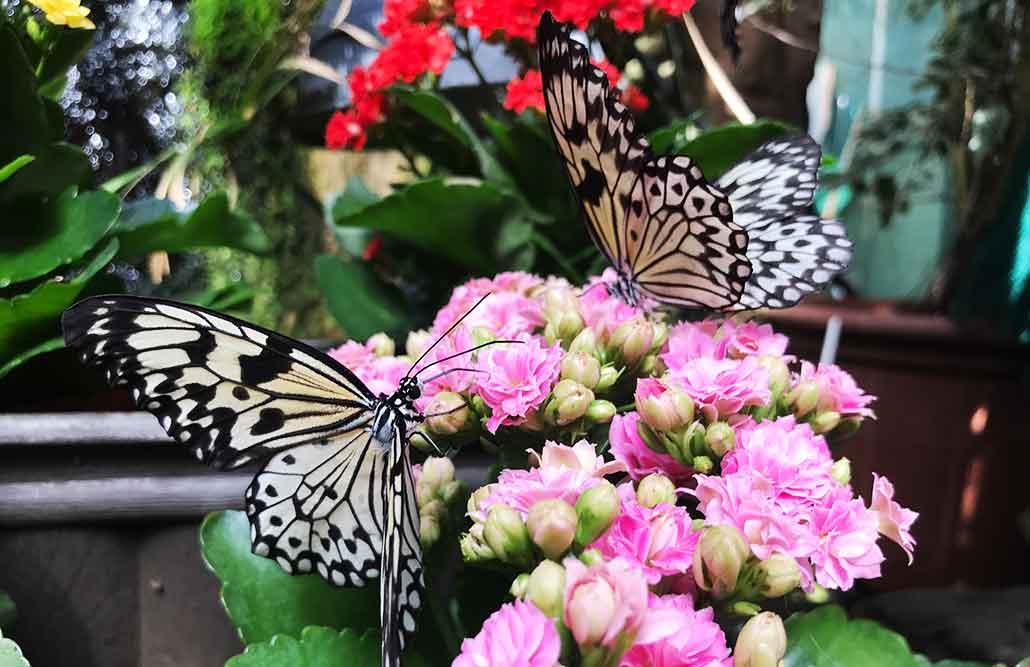 Zoo Allgäu Ausflugsziele bei Regenwetter im Allgäu Schmetterlingsgarten Pfronten