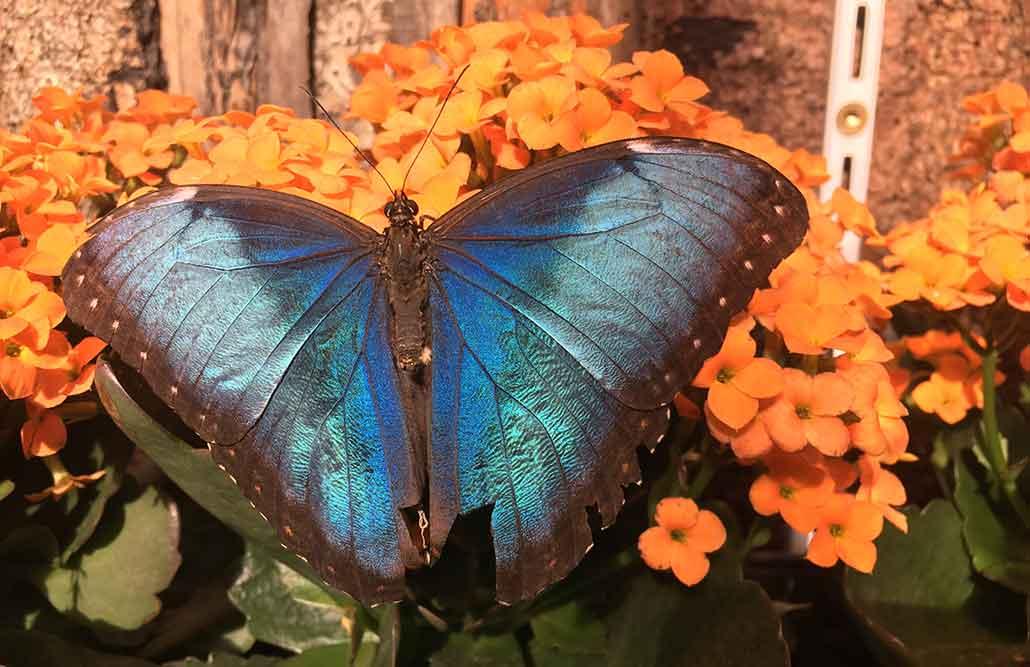 Ausflugsziele Ostallgäu Schmetterlingsgarten Pfronten