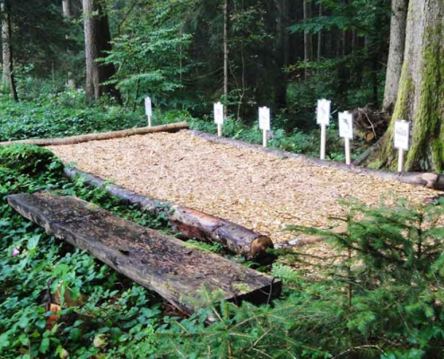 Wald-Sinneaktiv-Pfad Mayerhöfen