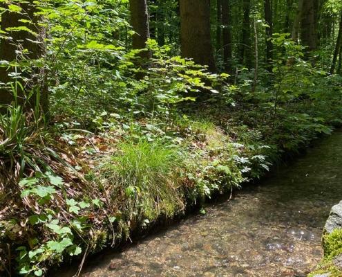 Bach im Walderlebnispfad Bannwald bei Ottobeuren im Unterallgäu