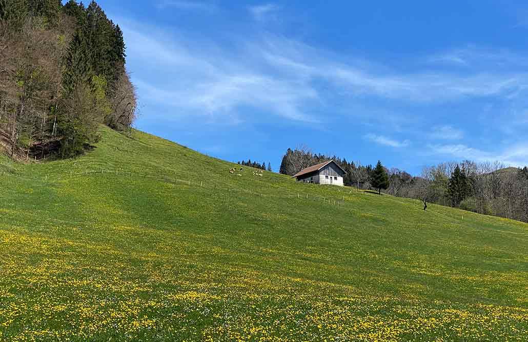 Bergwiese Alpe Allgäu