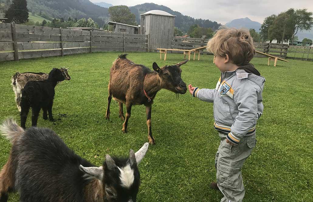 Burgberger Tierparadies im Allgäu