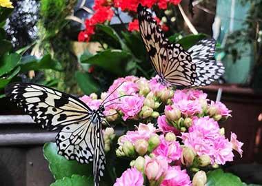 Ausflugsziele bei Regenwetter im Allgäu Schmetterlingsgarten Pfronten