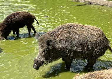 Zoo Tierpark Allgäu Wildgehege Unterallgäu