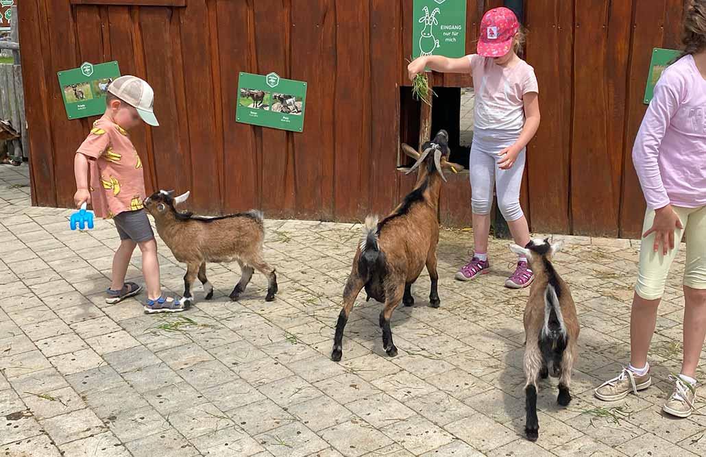 Abenteuerspielplatz Allgäu Streichelzoo