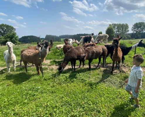 Alpaka Wanderung Allgäu