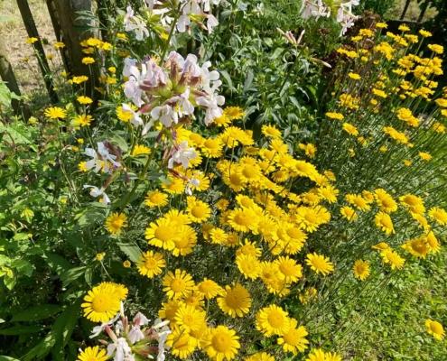 Schwäbisches Bauernhofmuseum Illerbeuren Blumen