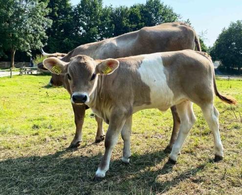 Schwäbisches Bauernhofmuseum Illerbeuren Tiere