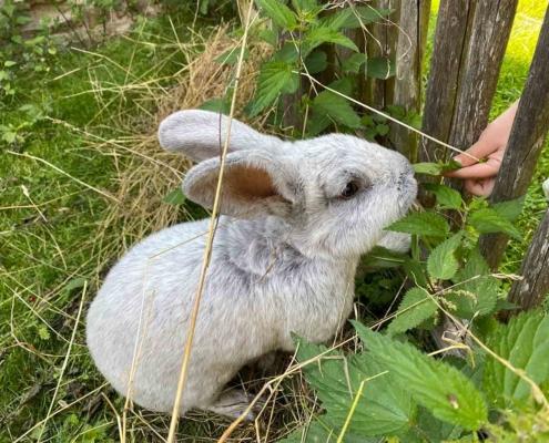 Schwäbisches Bauernhofmuseum Illerbeuren Kaninchen