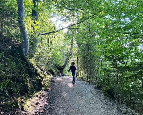 Bergwald Füssen Ziegelwies