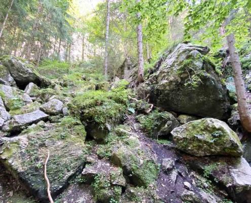 Bergwaldpfad Füssen