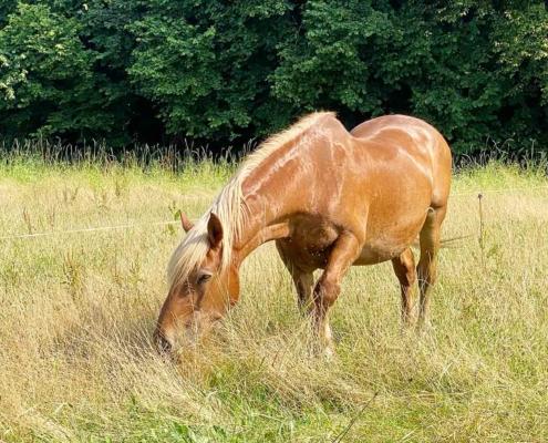 Illerbeuren Bauernhofmuseum Pferd