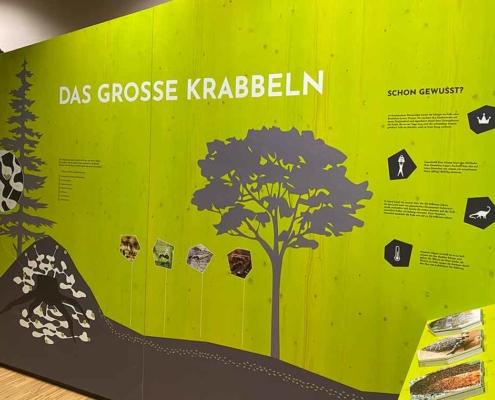 Walderlebniszentrum Füssen Ameisen