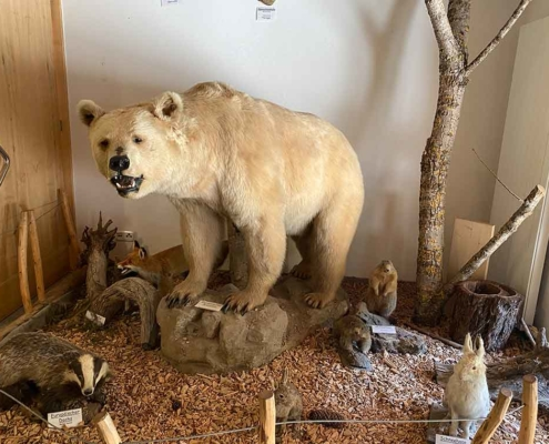 Walderlebniszentrum Füssen Tiere