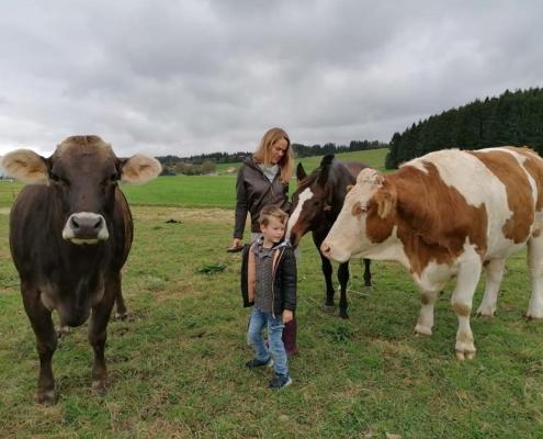 Kühe Allgäu